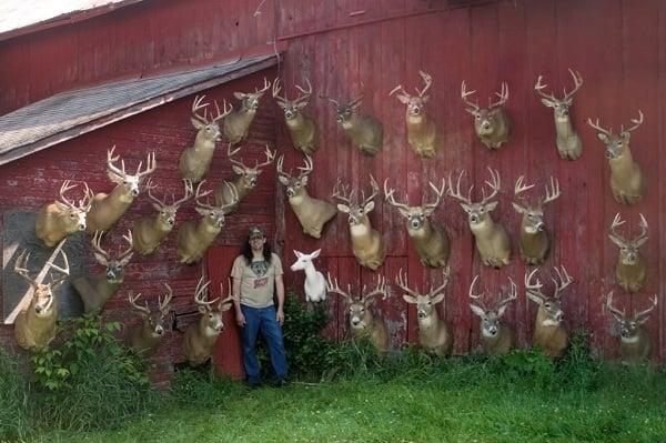 Dan infalt hunting